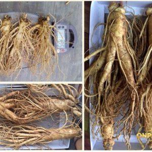 Nhân sâm Hàn Quốc loại 4 củ/kg NS002 2