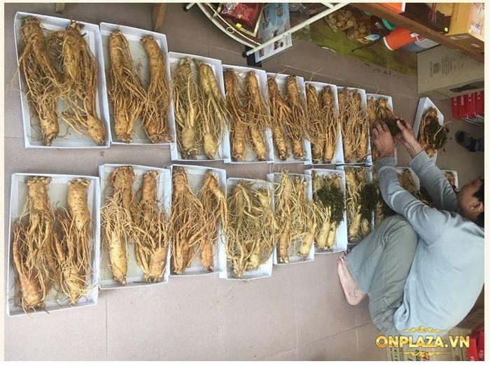 Nhân sâm Hàn Quốc loại 4 củ/kg NS002 6