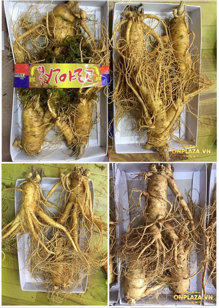 Nhân sâm tươi Hàn Quốc 3 củ/kg NS001 4