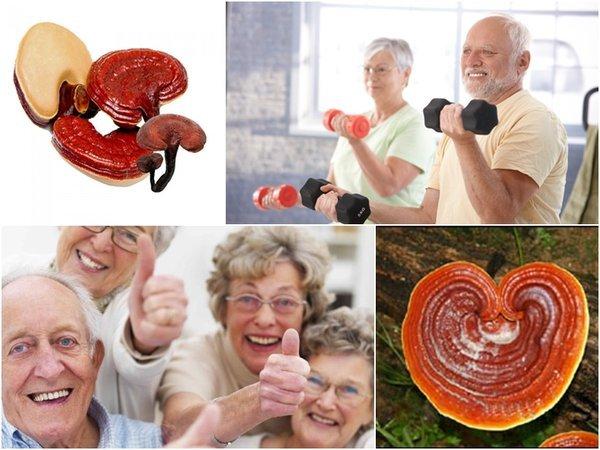 nấm linh chi tốt cho người cao tuổi