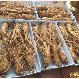 Nhân sâm Hàn Quốc loại 6 củ/kg NS004 4