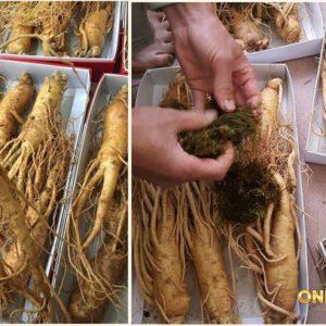 Nhân sâm Hàn Quốc loại 8 củ /kg NS006 3