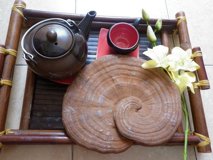 trà nấm linh chi thích hợp với người già
