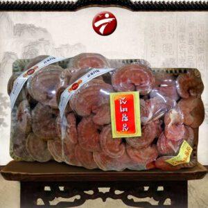 Nấm linh chi bao tử Hàn Quốc nổi tiếng về chất lượng