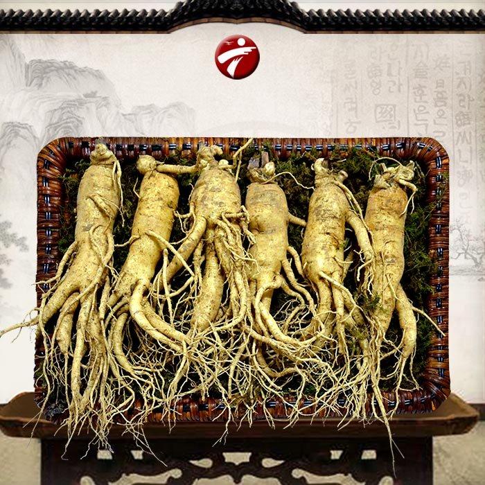 nhân sâm Hàn Quốc bổ dưỡng cho cơ thể nên được tìm mua rất nhiều