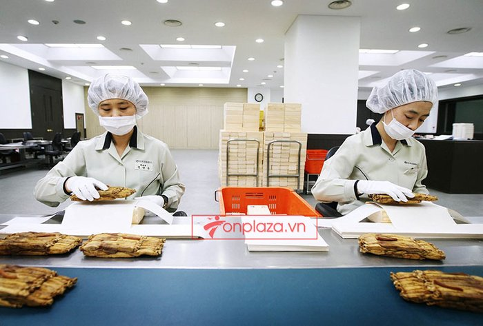 quy trình sản xuất và đống gói sp hồng sâm củ khô cao cấp chính phủ kgc hộp thiếc 4