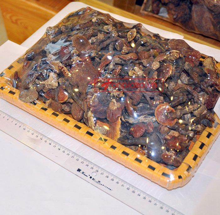Nấm lim xanh rừng Quảng Nam tai nhỏ, già nấm hộp 1kg L309 2