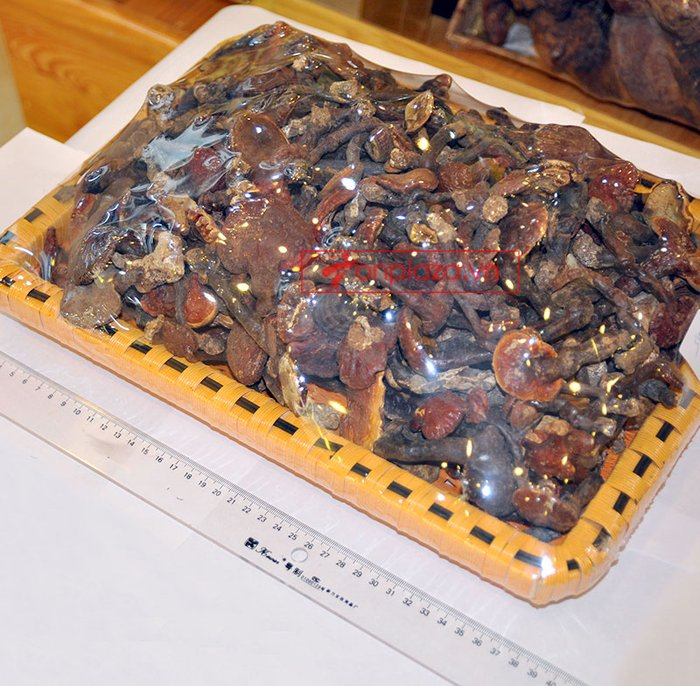 Nấm lim xanh rừng tự nhiên Quảng Nam tai nhỏ hộp 0.5kg L310 2