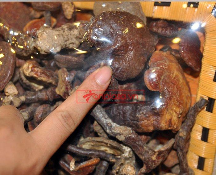 Nấm lim xanh rừng tự nhiên Quảng Nam tai nhỏ hộp 0.5kg L310 4
