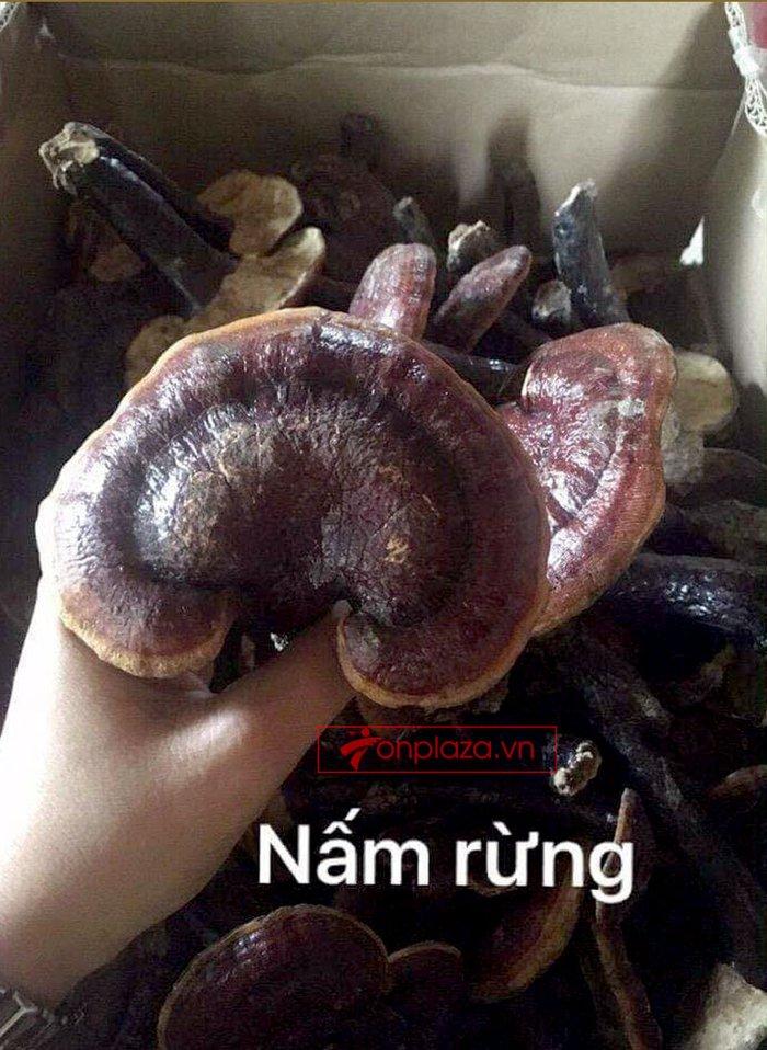 Nấm lim xanh rừng tự nhiên Quảng Nam tai nhỏ hộp 0.5kg L310 7