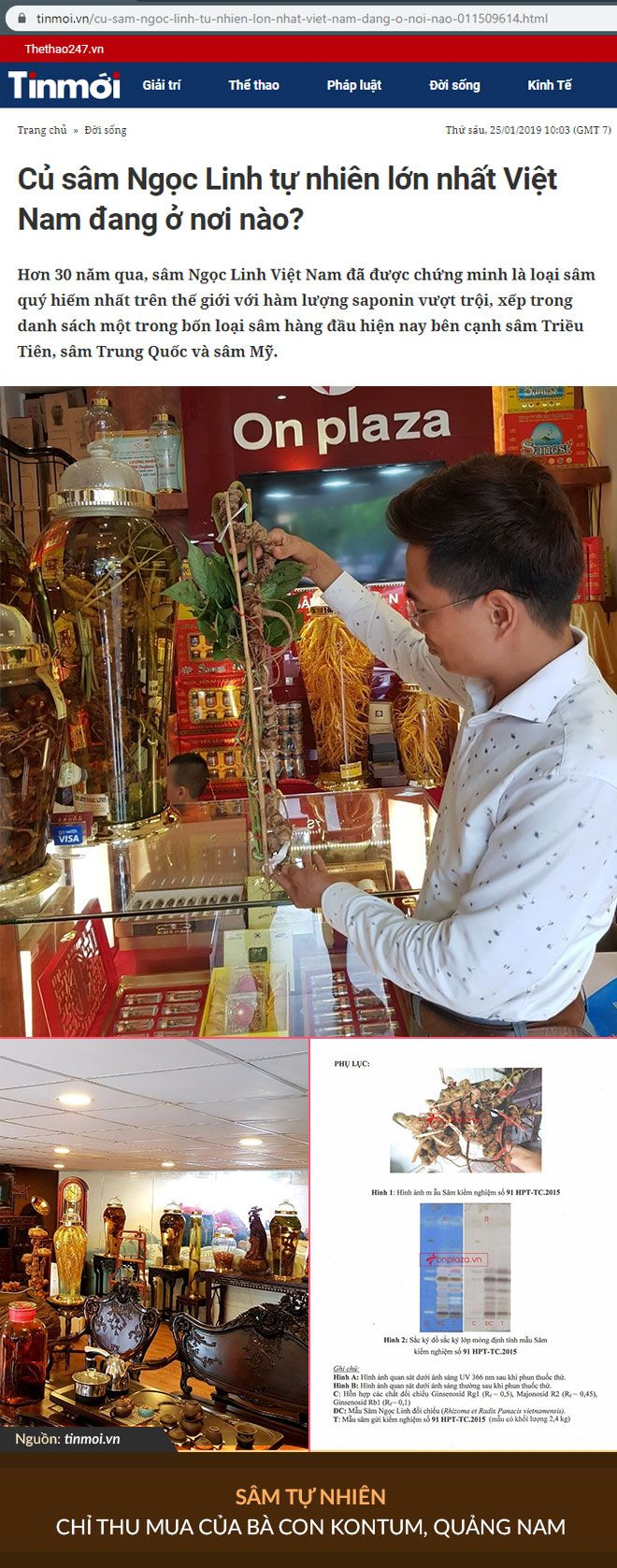 Trên báo Tin mới có bài viết về củ sâm lớn nhất Việt Nam đang có tại phòng trưng bày của anh Đào Quang